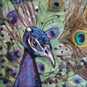 !purplepeacock