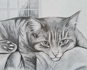 cat2017a